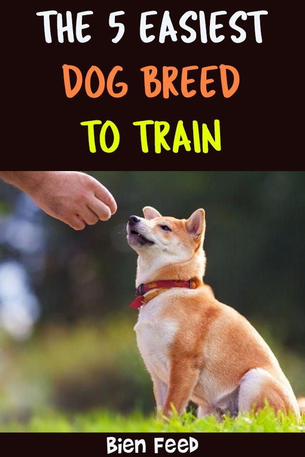 The 5 Easiest Dog Breed To Train Dog Breeds Easiest Dogs To