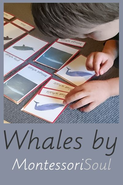 Lots of great ideas for Whale related activites. Lots of links to free Montessori materials too!