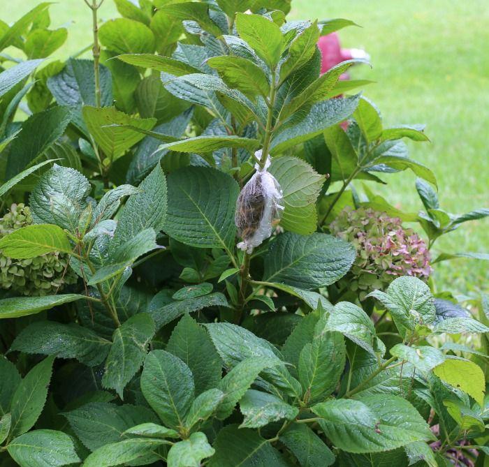 a57580489f11b4dfdceaa8860d34c416 - How To Take Hydrangea Cuttings Gardeners World