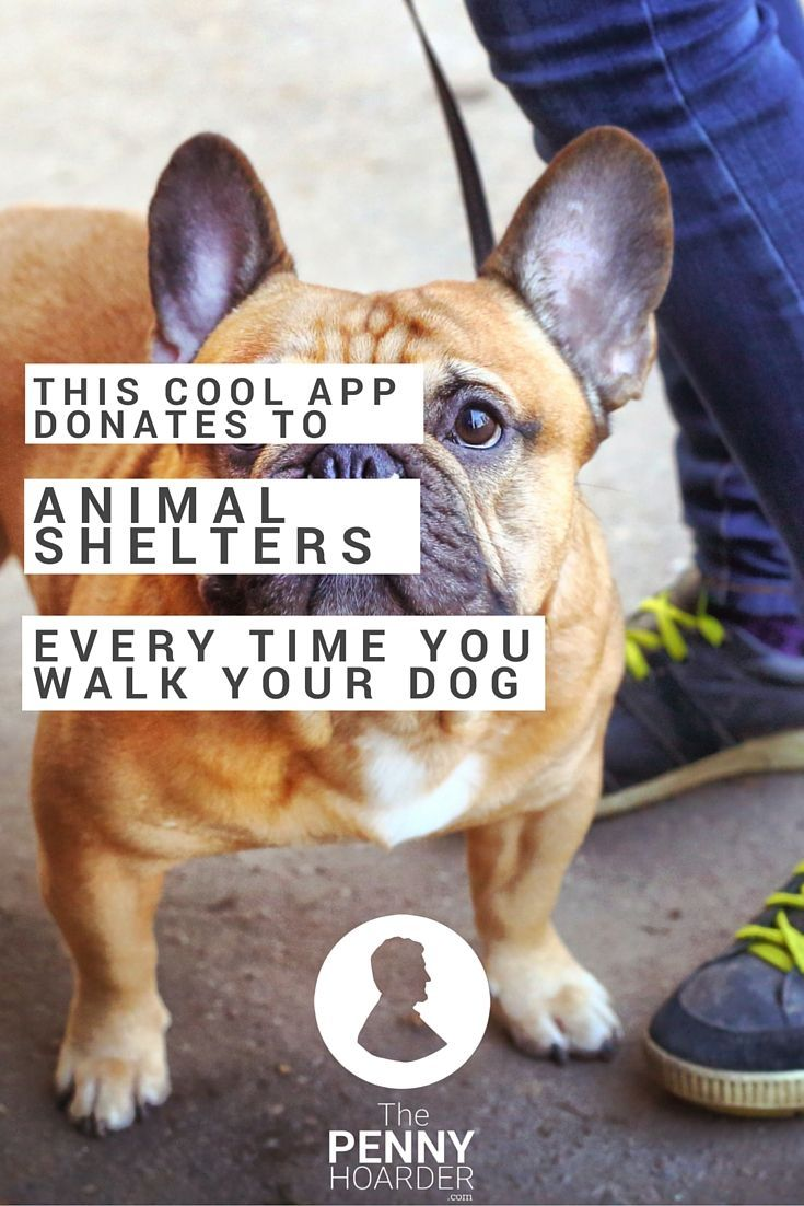 Don't just walk the dog -- take a walk for a dog! This app helps you raise money for animals without spending a single cent. - The Penny Hoarder http://www.thepennyhoarder.com/walk-for-a-dog/