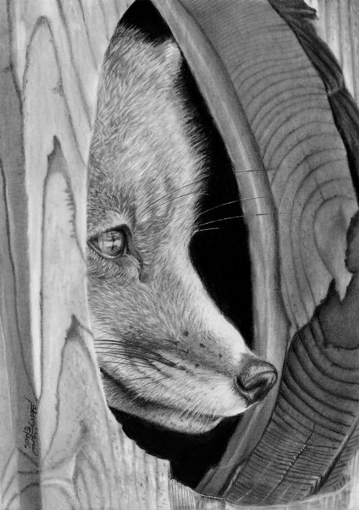 Fox - A4, tužky