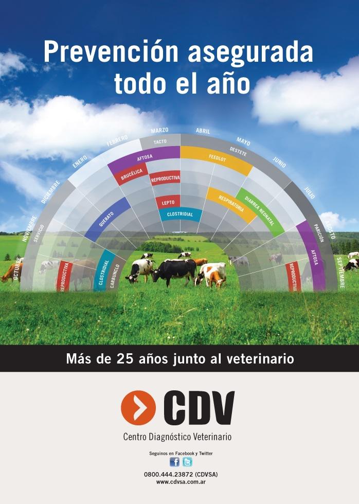 Centro Diagnóstico Veterinario - Magazine Advertising