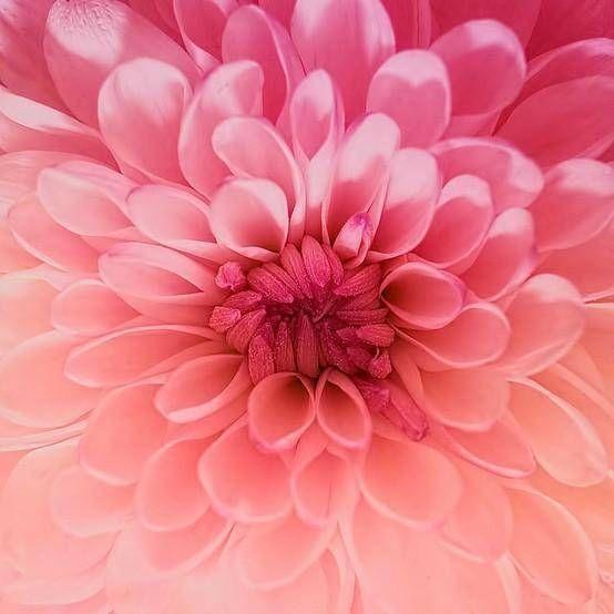 Ombre Flower http://cagedcanarynz.blogspot.com/