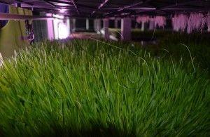 Agritom interior fodder machine