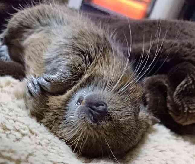デグーは夜行性ではありません デグー 可愛すぎる動物 動物