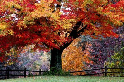 Fall in Rhode Island I spent my birthday here yeearrs ago (maybe my 14th or 15th?) It's the most ...