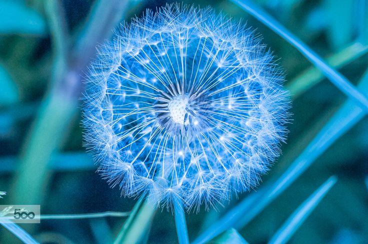 night blue by Graziella Serra Art & Photo on 500px