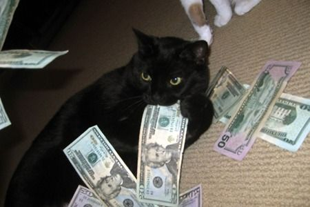 Cats with money. This is hilarious! catsandmoney.com