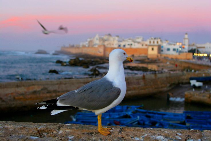 A tour designed to give the traveler the broadest sense of #Morocco, its culture, people, geography, cuisine and wine.