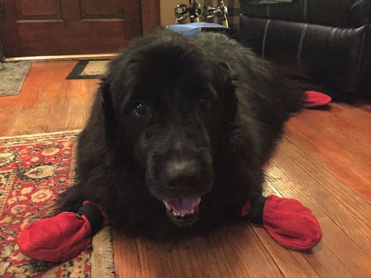 Best Summer Dog Boots Meshies By Barko Booties Images On - Dog booties for hardwood floors
