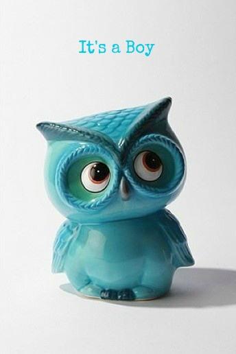 Baby Boy Gender Announcement - Owl