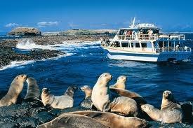 photos of phillip island - Google Search Seal Rocks Tour