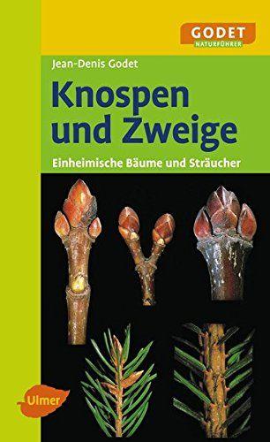 Knospen und Zweige: Einheimische Bäume und Sträucher by Jean-Denis Godet http://www.amazon.co.uk/dp/3800157780/ref=cm_sw_r_pi_dp_YEEaxb1VXYAEQ