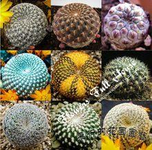 Mixture 20 succulent seeds mini cactus plants succulent plants bonsai semillas plantas for sementes de flores(China (Mainland))