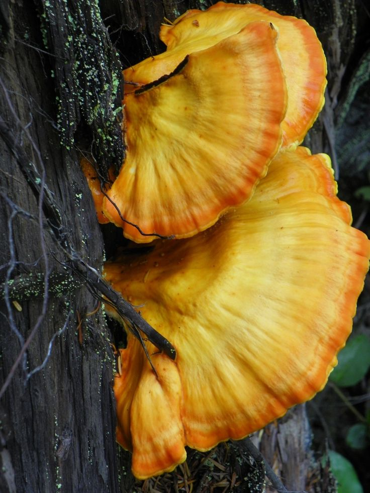 Fungus on a tree trunk