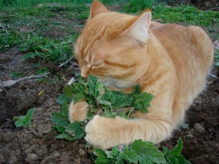 Cat smelling the flowers (catnip?) Animals Pinterest