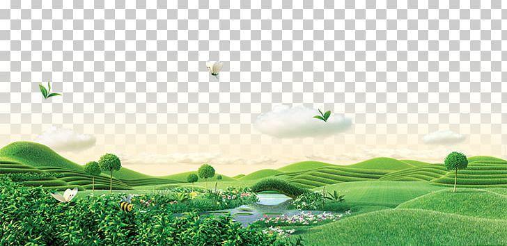 Green Tea Png Background Green Butterfly Computer Computer Wallpaper Ecoregion Computer Wallpaper Background Garden Set