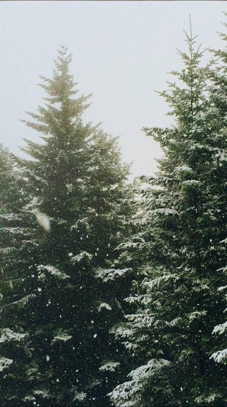 4k Winter Tree Iphone X Wallpaper 695383998696064209 Iphone X Wallpapers Hd