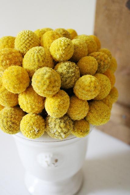 mustard craspedias.