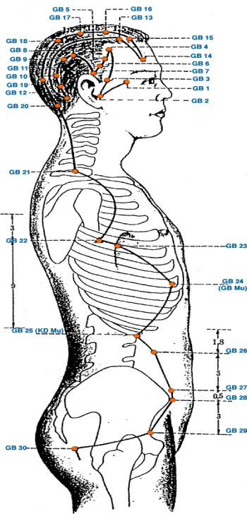 Меридиан желчного пузыря - Triquetra Технологии Здоровья|Традиционная китайская медицина и цигун