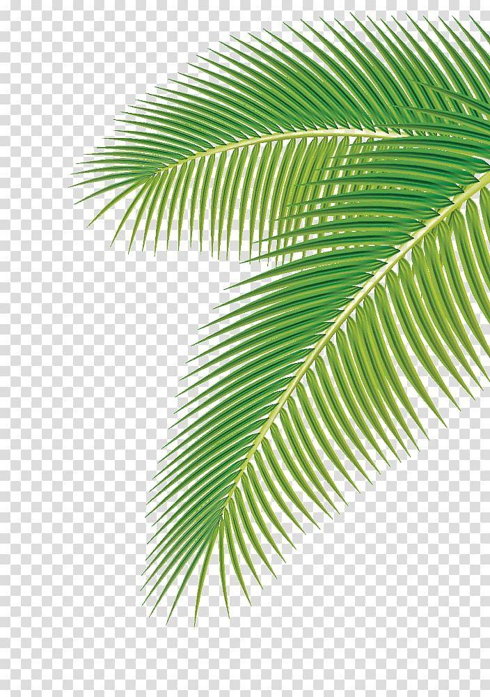 Arecaceae Leaf Euclidean Palm Leaf Green Palm Leaf Transparent Background Png Clipart Palm Background Palm Leaf Art Green Screen Background Images