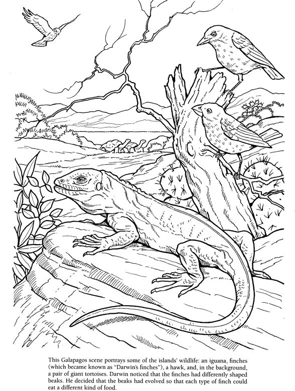 charles searles coloring pages - photo#26
