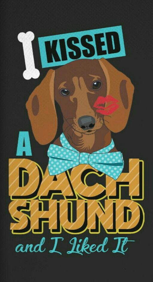 I Kissed A Dachshund And I Liked It Dachshund Breed Funny