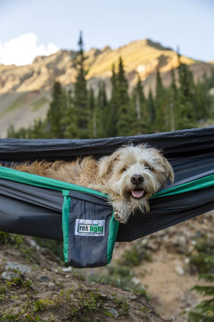 Hammock time with a furry friend.