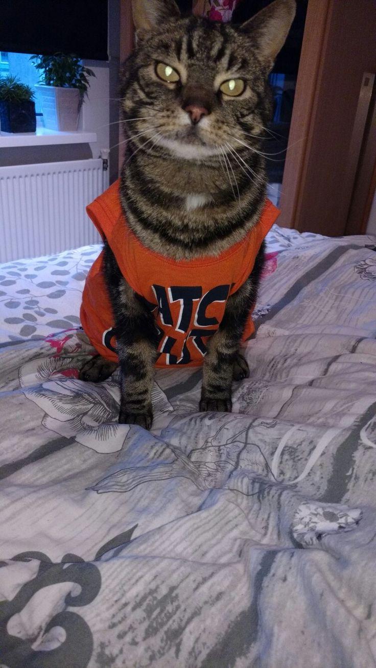 Former stray cat Pim straycat cat cottonball fur paws