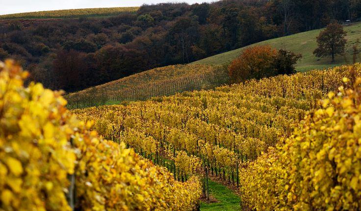 Cantina Produttori Valdobbiadene Val d'Oca  #italy #veneto #prosecco #wine #treviso #valdobbiadene  http://www.venetoesapori.it/it/protagonista/cantina-produttori-valdobbiadene-val-d%E2%80%99oca