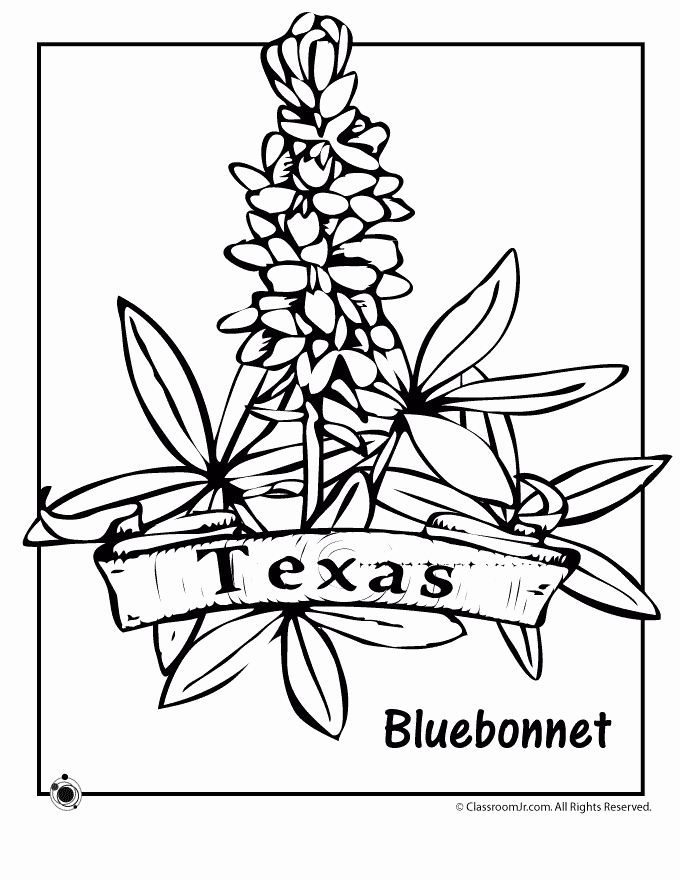 Texas State Flower Coloring Page Luxury Texas Bluebonnets Coloring Download Texas Bluebonnets In 2020 Flag Coloring Pages Flower Coloring Pages Coloring Pages
