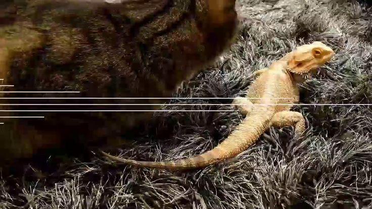 Cats meet Dragon - YouTube https://youtu.be/RC715_XXLGg #cats #cat #catsofinstagram #catsanddogs #catstocker #catsofinstgram #catskills #catslovers #ilovecats #catsofsoutheastalaska #ilovemycat #meow #catsofinsta #chat #catsoftheworld #kitten #catsoftheday #cats_of_instagram #catslover #ilovemypet #gatta #katzenliebe #gato #meowmeow  #catstagram #catsrule