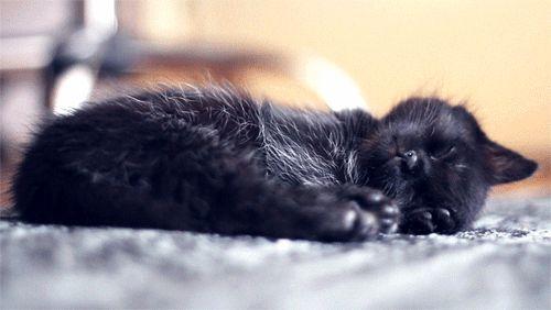 1. Mesmo dormindo, essas criaturinhas são capazes de te fazer vomitar múltiplos arco-íris