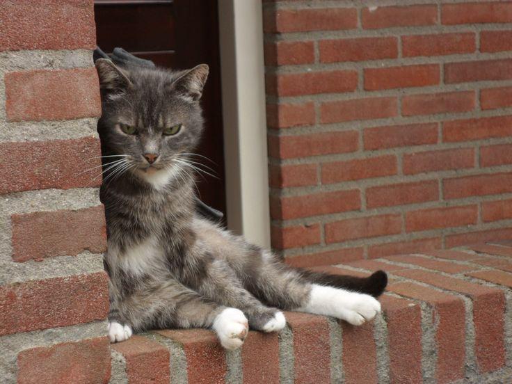 Grumpy cat, Bontepapensteeg, August 2016.