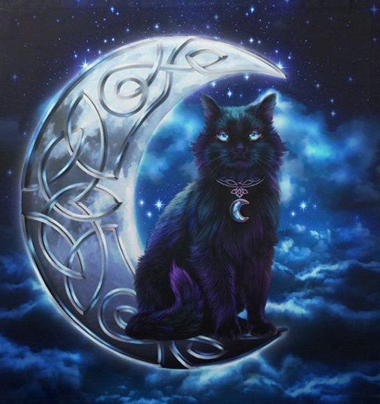Black Cat Cove Menu