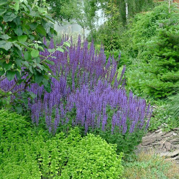 Hana N. - garden