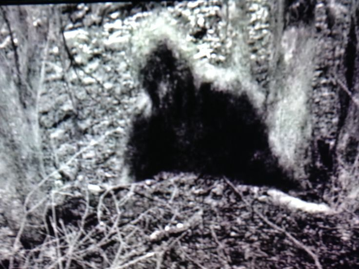 Bigfoot (folklore)