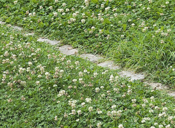 Mon premier jardin : astuces pour jardiniers pressés