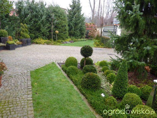 Ogród nie tylko bukszpanowy - część I - strona 16 - Forum ogrodnicze - Ogrodowisko