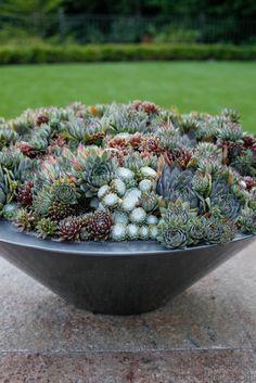 Succulent Bowl Design