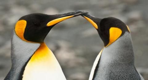 Get in the know with these facts about penguins #penguinawarenessday