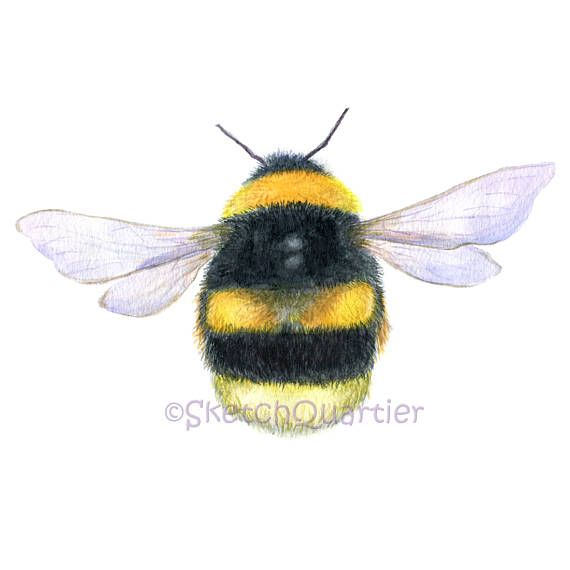 Hand painted watercolour Bumble Bee/ Digital clipart on white