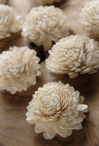 """Sola Zinnia 2.25"""" Flowers (2.25"""" wide)   12 for $7"""