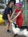 Rain, Hayne & Shine farm experience
