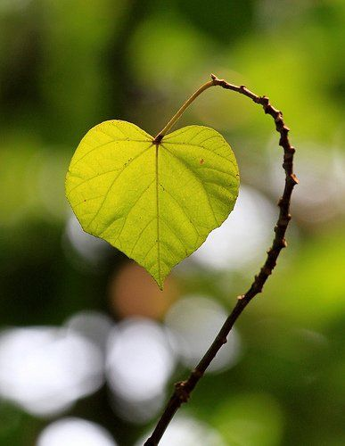 naturally growing love <3