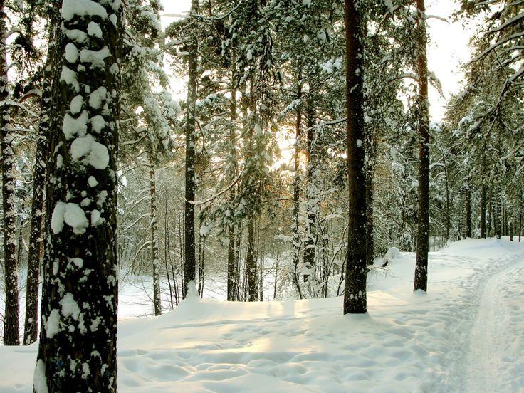 árboles imágenes, fondos de escritorio de madera, vector st petersburgo, fotos de carretera, fondos de invierno, los troncos de