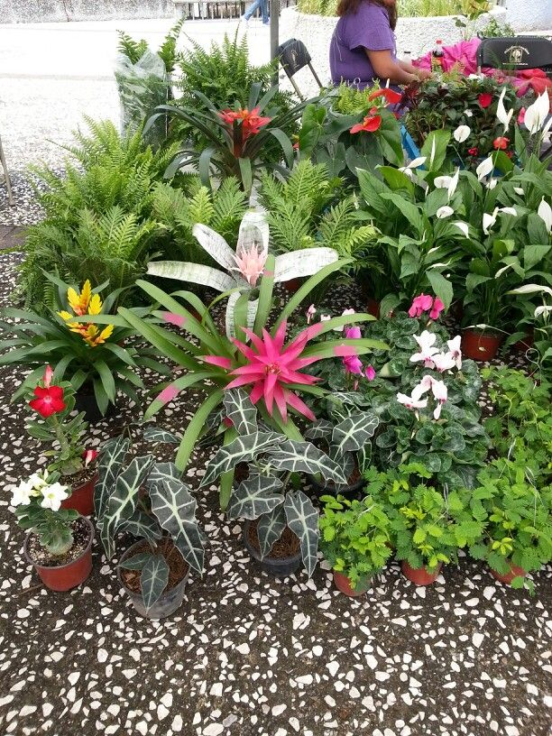 Plantas de xochimilco m xico jard n pinterest m xico for Jardin xochimilco
