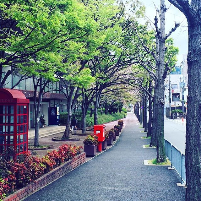 【qdwsht】さんのInstagramをピンしています。 《#kyoto#japan#streetstyle #streetphotography #京都#街角#街角スナップ #綺麗#桜#桜の季節 #街角風景》