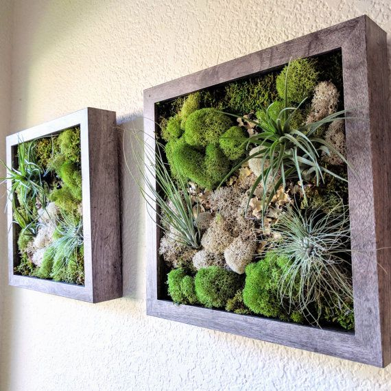 Framed Vertical Wall Garden with Three Air Plants Tillandsia