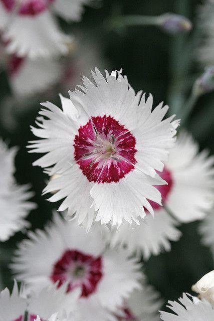 Flowers - Bloemen